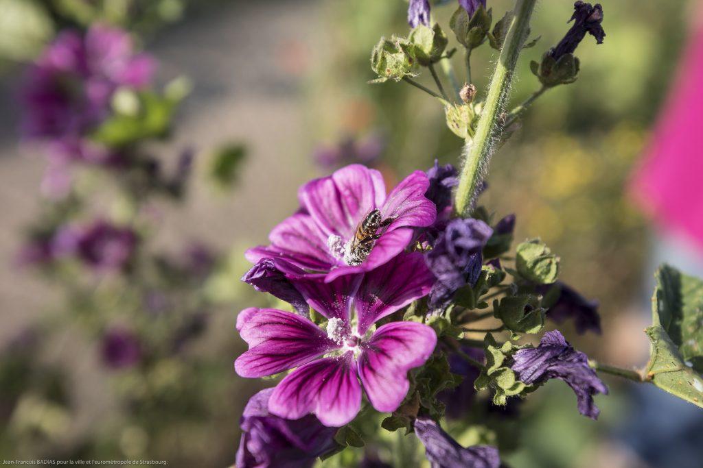 Fleur commestible